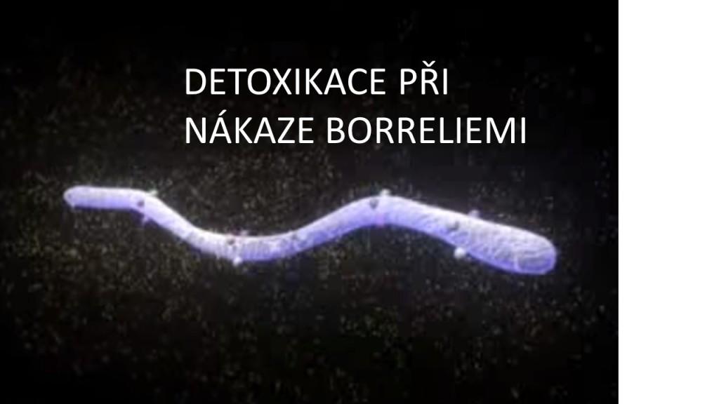 borrelie 5