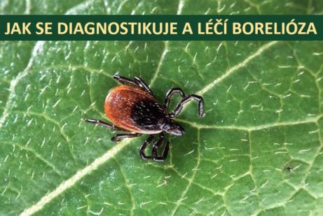 Jak se léčí a diagnostikuje borelióza